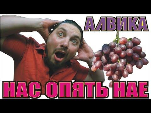 Я Отказался от Посадки АЛВИКИ...Почему Калугин НАМ не Сказал об ЭТОМ...?виноград АЛВИКА