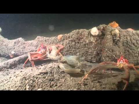 Diveworld Videos | Lochaline scuba trip 2015