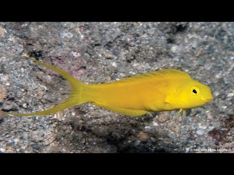 Little Tropical Fish: with a Big Bite poisonous.