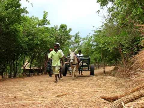 Donkey Project, Empowering women in Malawi, Matunkha Centre (donkey + cart 2)