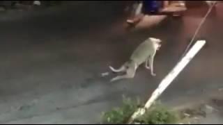 Собака актер кино