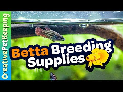 Supplies And Tank Size: Breeding Betta Fish