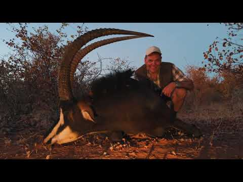 PJ Safaris - Buffalo Hunt 2019