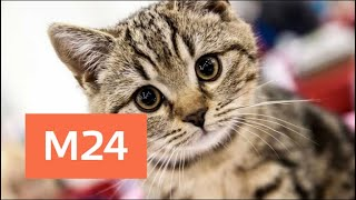 Смотреть видео Выставка редких пород кошек открылась в