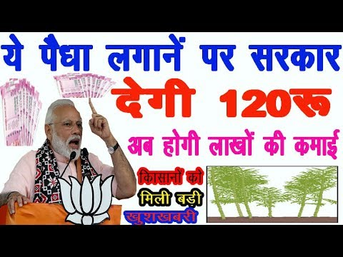PM Modi launched another new scheme for farmers..... (National Bamboo Mission)