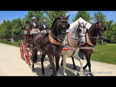 Competition Of Historic Carriages Venaria Reale Italy 2017,