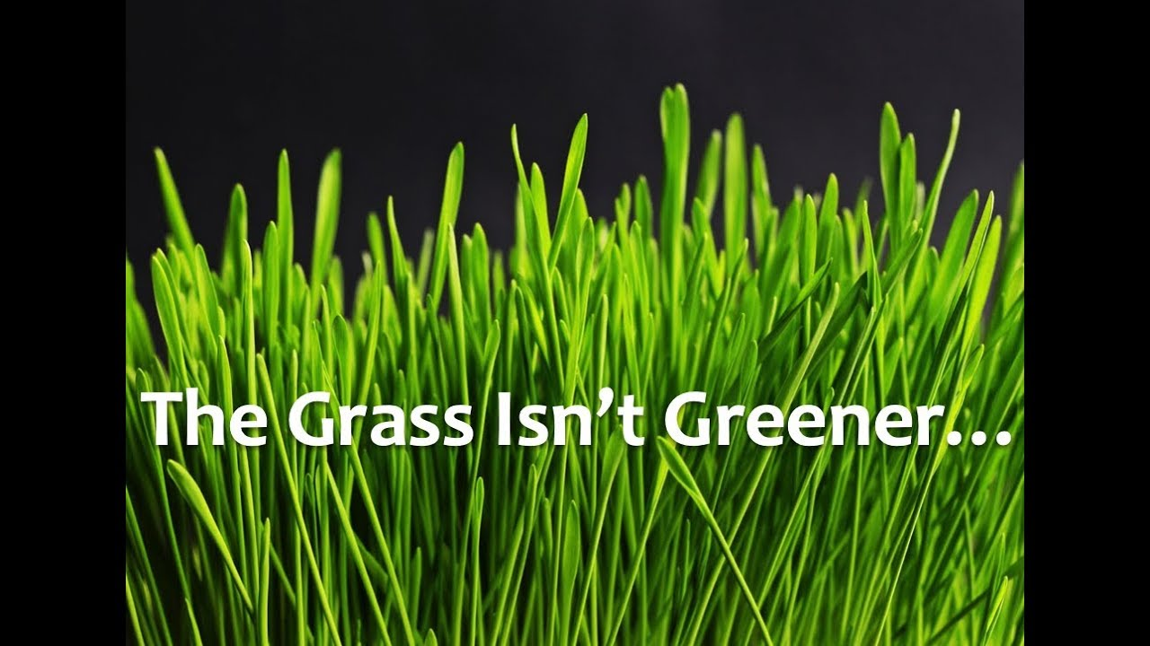 Dating grass is always greener