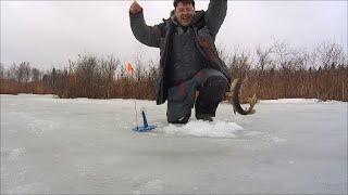 Рыбалка на жерлицы Ловим щуку Закрытие сезона твёрдой воды
