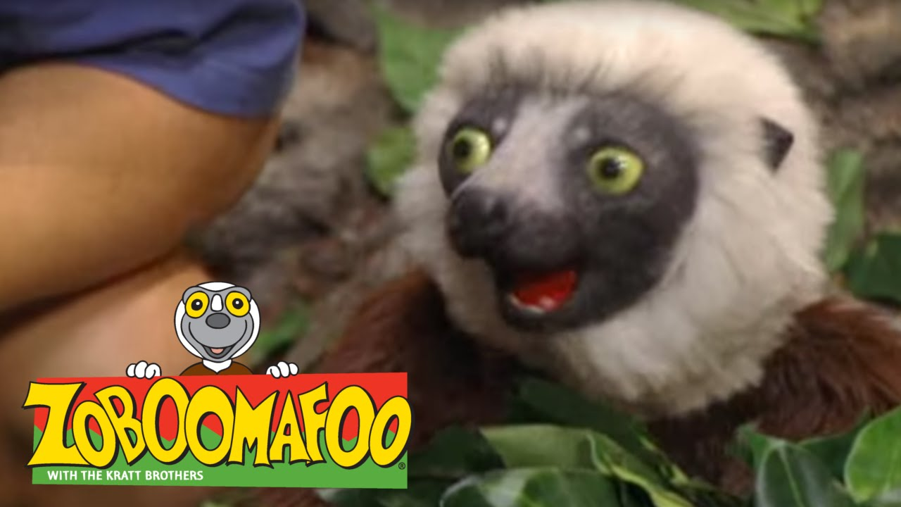 zoboomafoo 201 snakebellies full episode clip fail