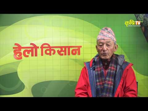 Hello kisan with Madan Rai  (मदन रार्इ, कृषि विद)