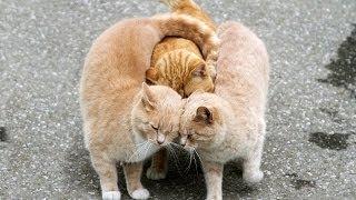 Мартовские коты. GuberniaTV
