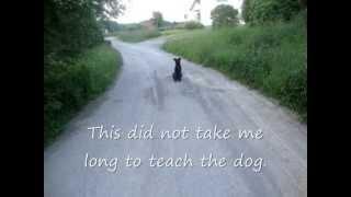 Silent Dog Training