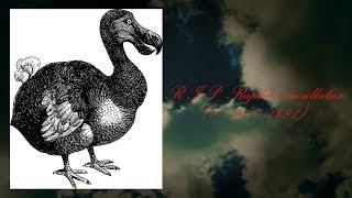Fotelowe historie kuchni - RIP dodo