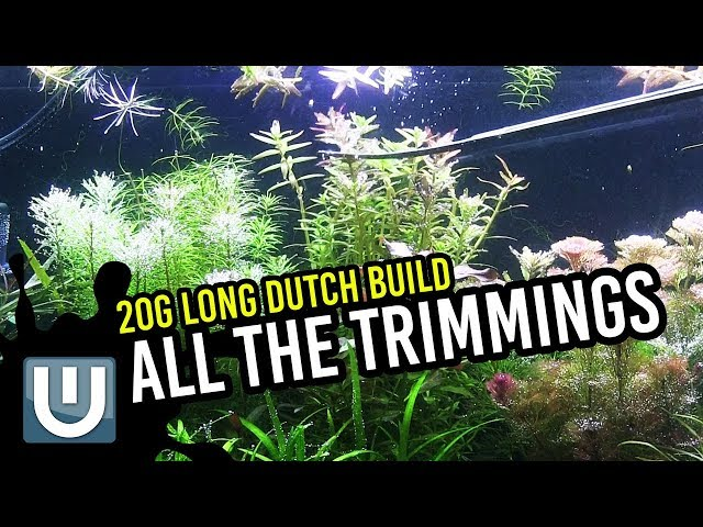 All the Trimmings | 20g Dutch Style | Week 5 Update: