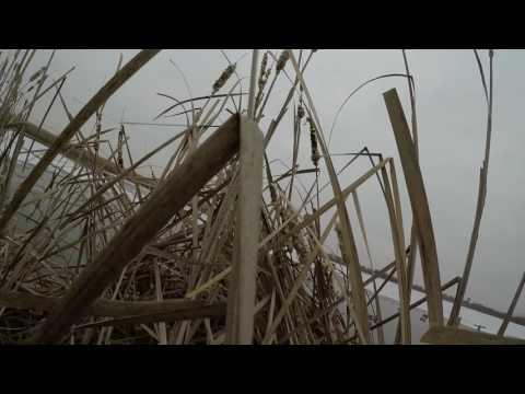 Ohio Public Land Duck Hunting - December 2016