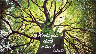Would you climb a tree?