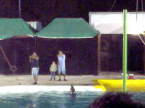 show de delfines en cd. victoria.mp4 Videos De Viajes