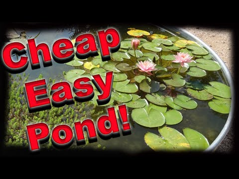 How To Make A Container Pond - Stock Tank Pond - Solar Powered!