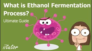 √ Fermentation and the preparation of ethanol | Production of Materials | iitutor