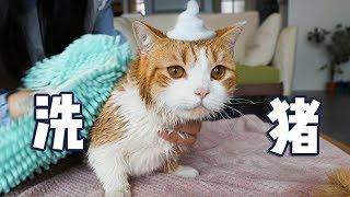 橘猫第一次体验洗澡,极度反抗多次逃跑,女主人气的直接干搓!