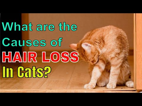 what-are-the-causes-of-hair-loss-in-cats?