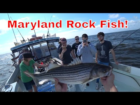 Bunkys Rock Fishing 2018 - Rock Fish, Maryland, Guided Tour