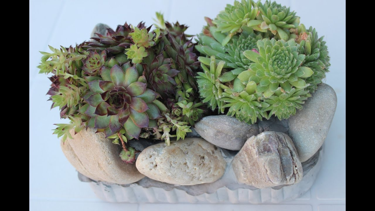 DIY MIni Steingarten Als Deko Für Garten Und Balkon /MIni Stone Garden As  Decoration For Balcony
