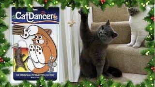 AMAZING 'CAT DANCER' TOY!!   VLOGMAS DAY 21 - CHRIS & EVE