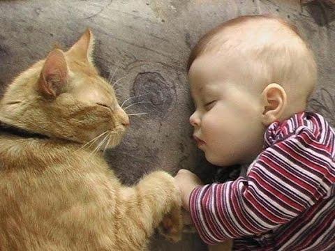 ПРИКОЛЫ  Дети и животные