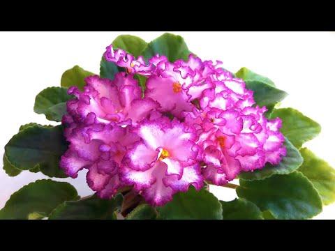 Оживут даже сухие цветы. 10 подкормок для комнатных цветов.