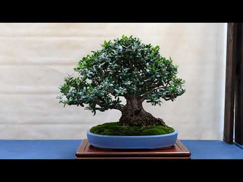 Euganea Bonsai Exhibition