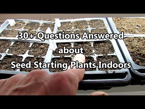 Seed Starting Basics: 30+ Questions Answered On Seed Starting Indoors - Digital Table Of Contents