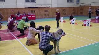 16.12.17 выставка собак город Кострома,эксперт Бегма И.В. Бест щенков.