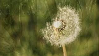 Nothing But Miracles - Roy Dahan - רועי דהן