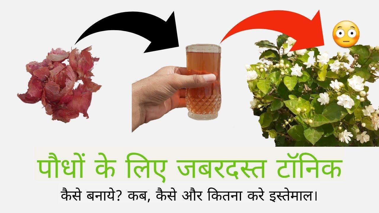 पौधों में फूल बढ़ाने वाला टॉनिक तैयार करें घर पर ही। Flowering Boosting Homemade Fertilizer.