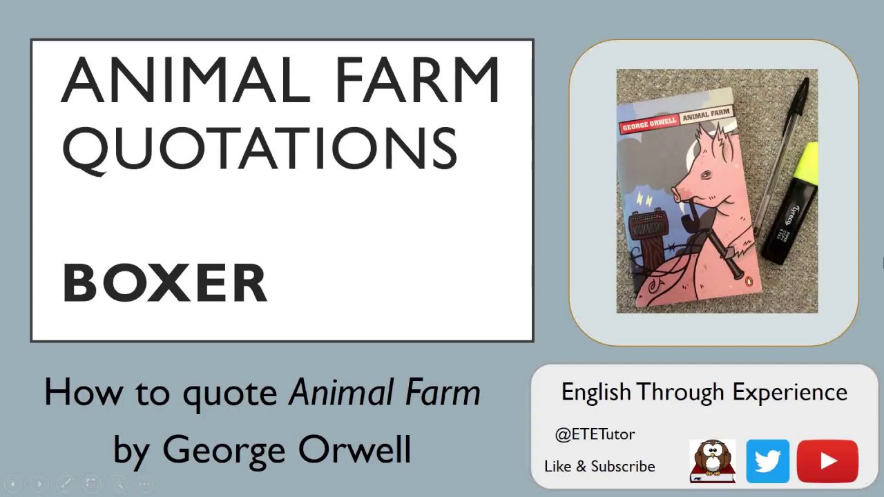 animal farm boxer essay Stumped on how to focus your animal farm essay 20 inspiring ideas for a brilliant animal farm essay boxer is badly injured but still goes to work trying to.