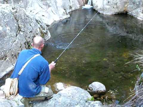 La pêche dans le domaine de Samara sur le silure de vidéo