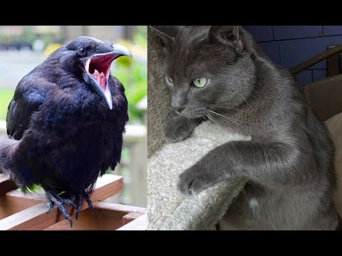 The Kits Cats Meet Rusty The Raven
