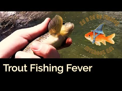 Trout Fishing Fever - Bishop Creek Canyon