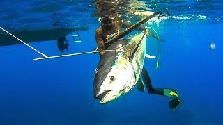 Spearfishing EXTREME BLUEFIN TUNA 200 KG - Carpaccio Day - Ψαροντούφεκο Τούνα 200kg  ✔