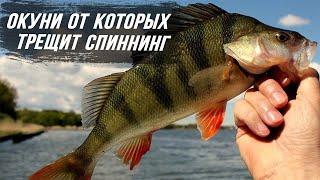 Рыбалка на спиннинг ловля окуня ВОТ ЭТО ГОРБАЧИ