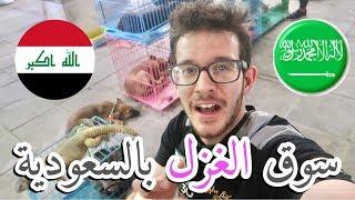 شفت بالسعودية حيوانات غريبة جدا مستحيل تصدق!!