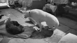 Senior Dog Gathering Room Cam 01-21-2018 00:01:05 - 01:01:06 thumbnail