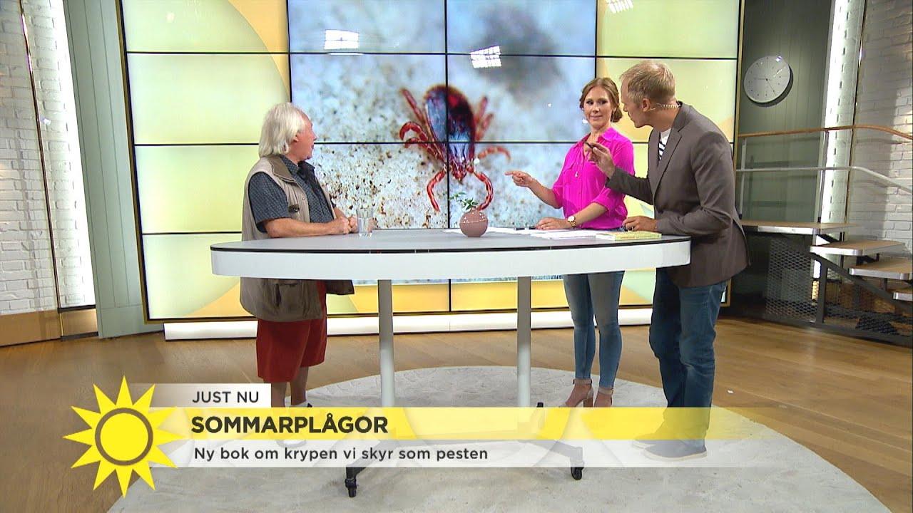 Zoologen tipsar – så blir du lättast av med mördarsniglar - Nyhetsmorgon (TV4)