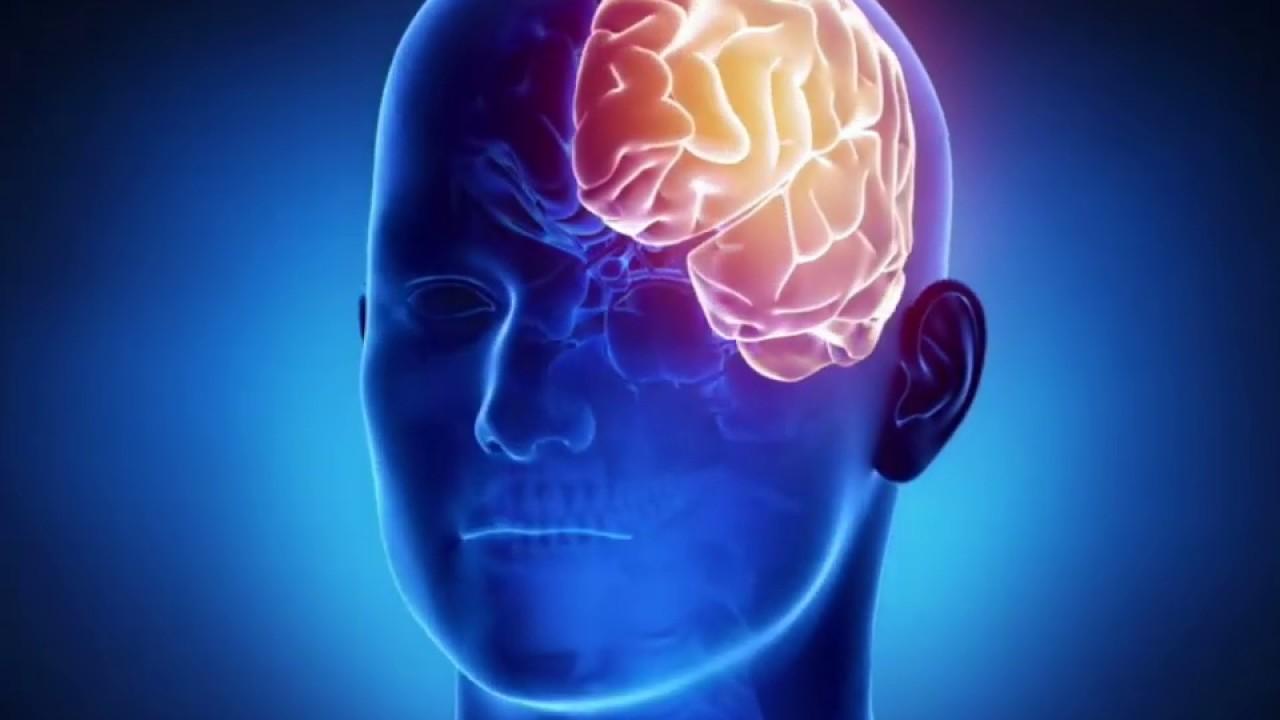 मानव मस्तिष्क ( Senior) - Biology - 3D animation - Human Brain Overview -  Hindi