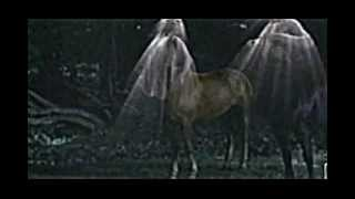 WOUNDED HEALER  by Kirk Mann ~ Official Video ~ Chiron the Centaur mythology