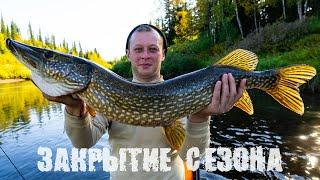 Закрытие летнего рыболовного сезона 2019 (ч.3) | Ловим щуку, хариуса и окуня | Потрошки с луком