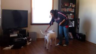 Dog Clicker Training Basics