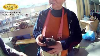 Выставка грызунов, Харьков, 04 марта, 2018, Радмир Экспохол, часть 1