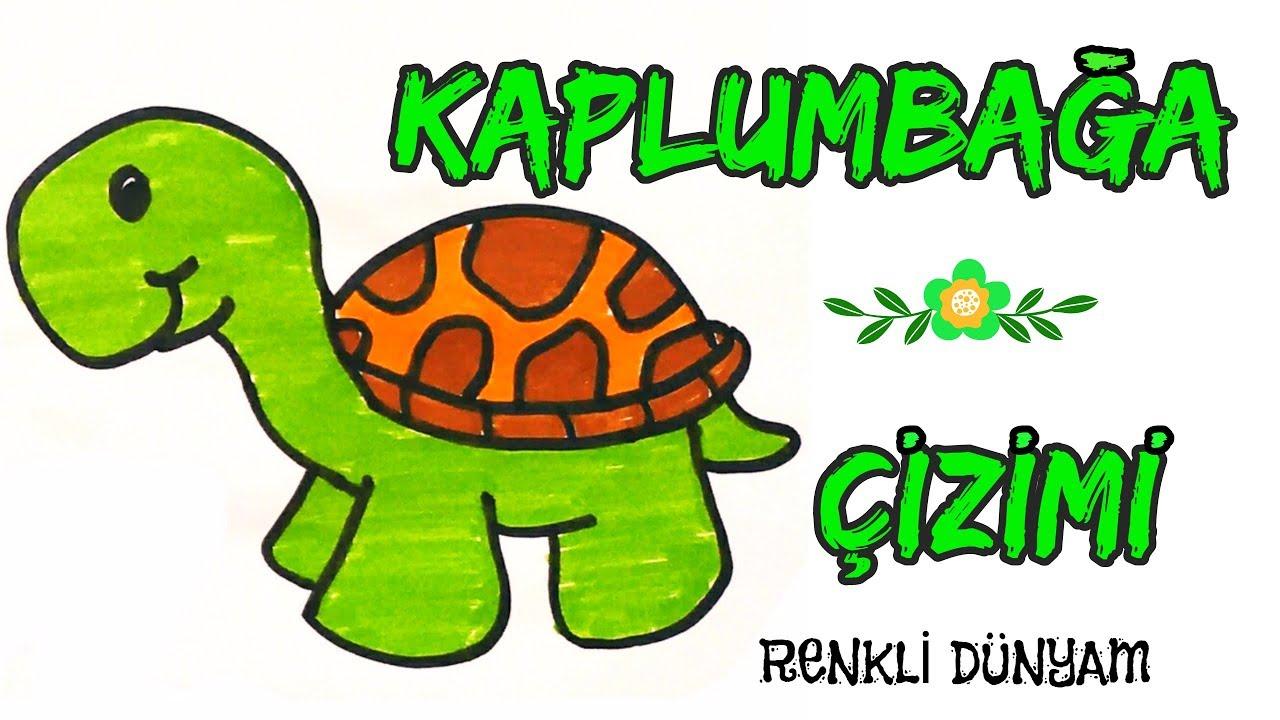 Sevimli Kaplumbağa Nasıl çizilir Kaplumbağa çizimi How To Draw A